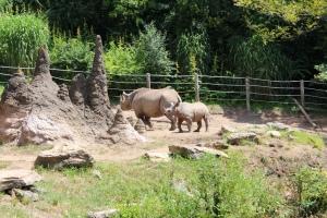 Pitt Zoo